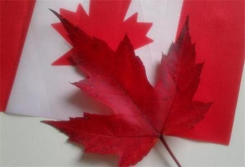 怎么才能拿到加拿大枫叶卡?